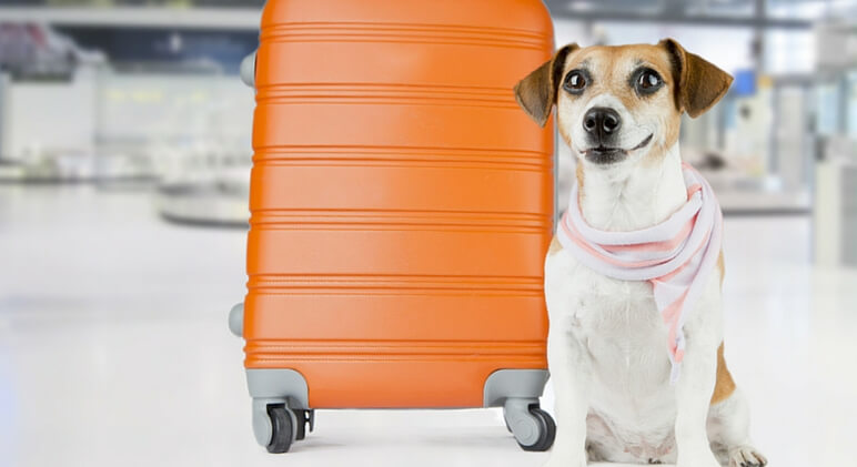 A first class pooch american airlines now offers pet cabins for Airlines that allow dogs in cabin