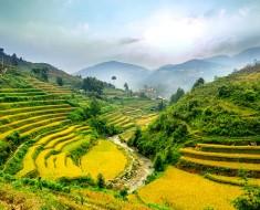 Rice Terrace Fields in Mu Cang Chai, Vietnam