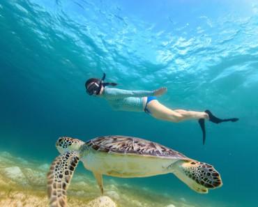 snorkeling 1
