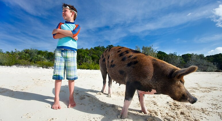 swim with pigs boy
